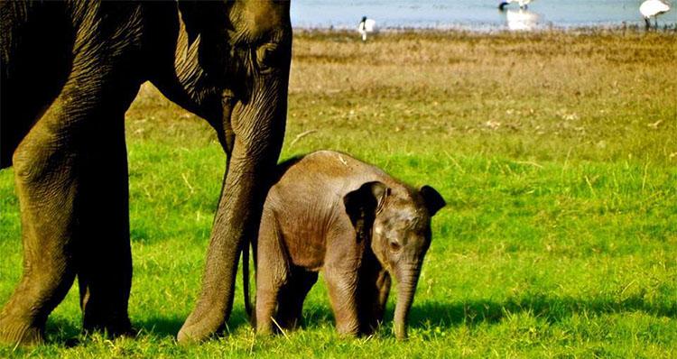 dieren op aarde, aardrijkskunde, groep 4
