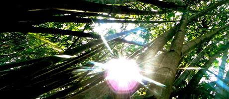 regenwoud, reuzenbamboe, plantengroei, aardrijkskunde online oefenen
