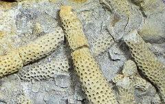 fossielen, aardrijkskunde, online oefenen