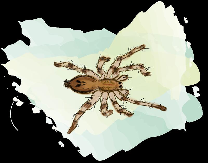 begrijpend lezen groep 6, struikspin, de spin van het jaar.
