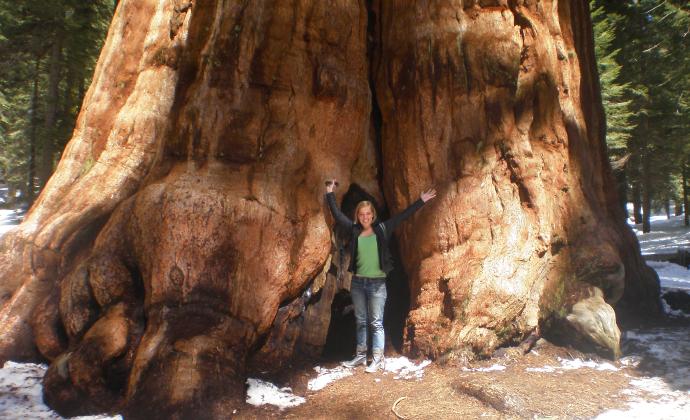 de oudste boom van de wereld, begrijpend lezen groep 8, online oefenen