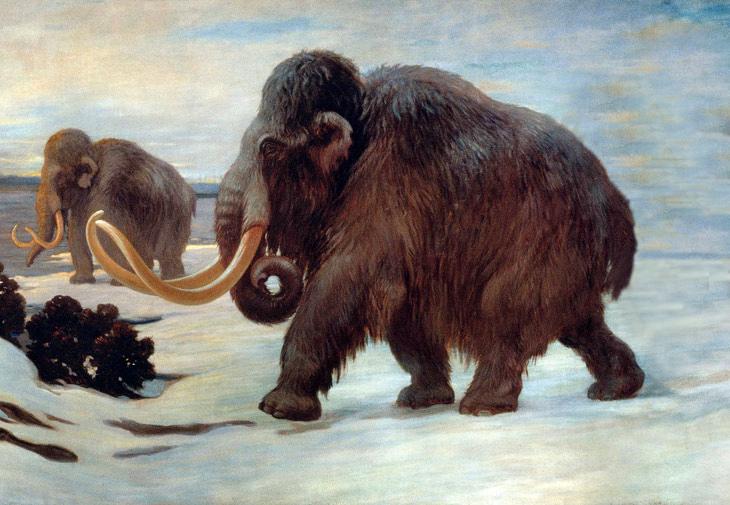 Tijdvak 1: Tijd van de boeren en jagers - De wolharige mammoet