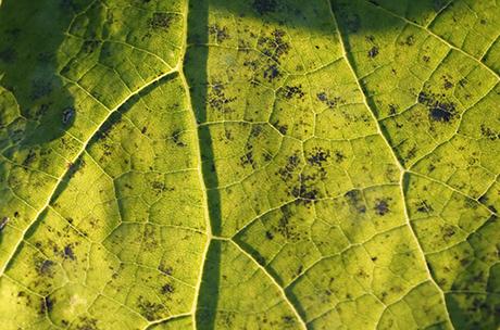 fotosynthese, natuuronderwijs, groep 7