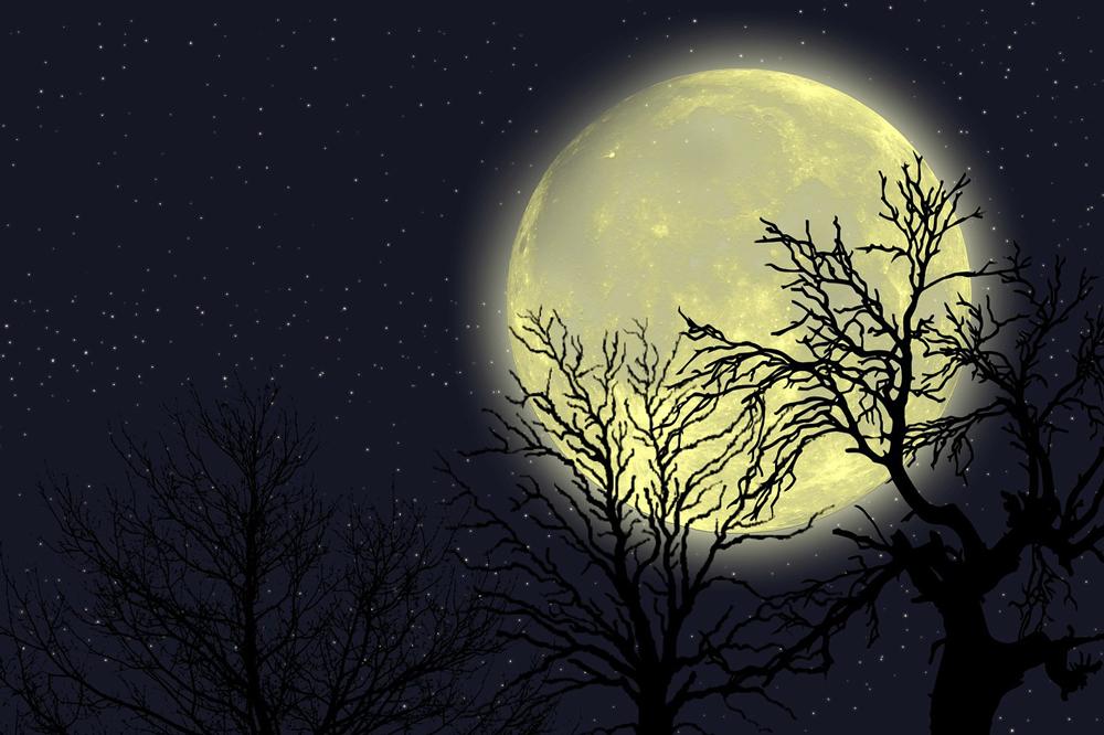 de volle maan, de maan schijnt niet, natuuronderwijs online oefenen