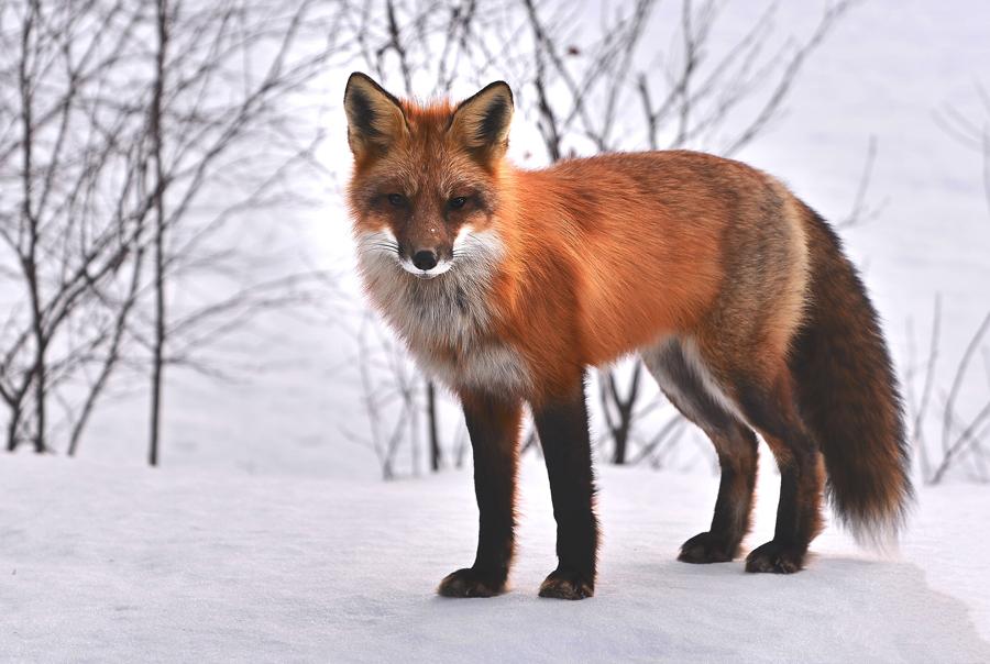 natuur en techniek, dieren in de winter