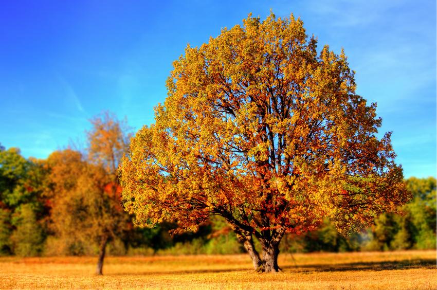 Waarom verliest de boom zijn blaadjes