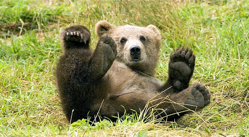 op welke manieren praten dieren, natuur en techniek oefenen