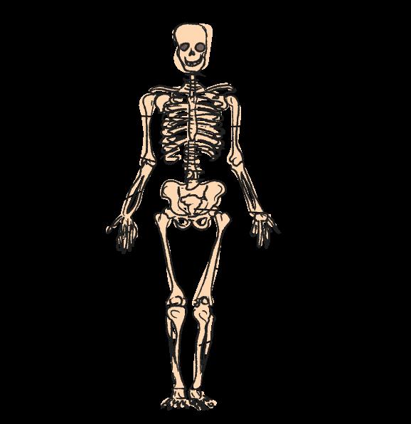 05_36954_skelet.png