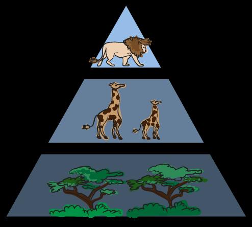voedselketens, natuuronderwijs, groep 7
