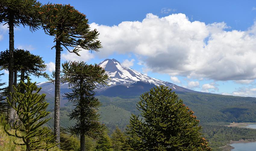 vulkaan, ecosysteem, diversiteit, aardrijkskunde oefenen
