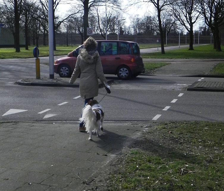 Veilig de straat oversteken. Online verkeer oefenen voor groep 7 en 8